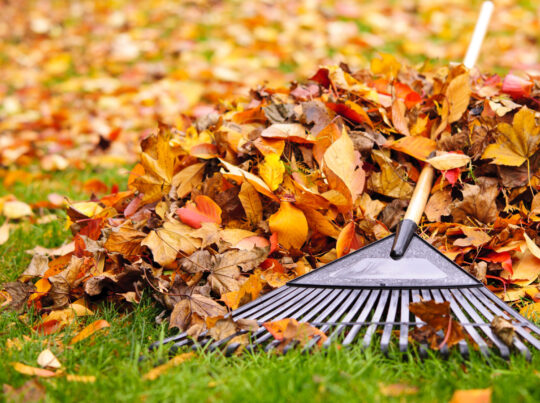 leaf removal cape cod