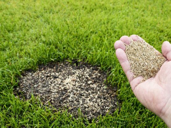 lawn seeding barnstable ma
